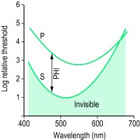Fig. I15 Photochromatic interval, PHI (P, curve of the threshold of hue; S, curve of the absolute threshold of light)