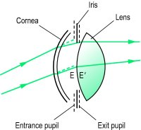Fig. P23 The entrance and exit pupils of the eye. E and E′ are the centres of the entrance and exit pupils, respectively (diagram not to scale)