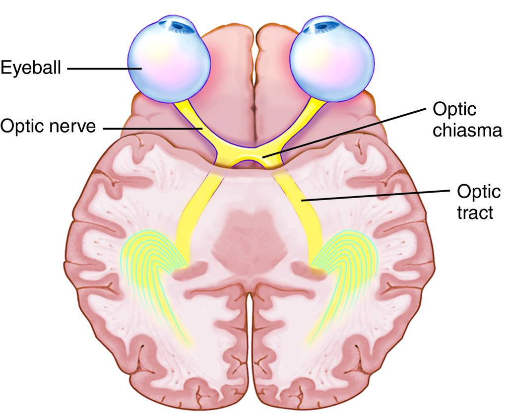 external image optic_nerve.jpg