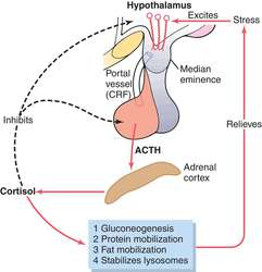 pituitary acth hypersecretion | definition of pituitary