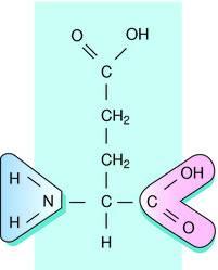 R Glutamic Acid Structure Glutamic acid |...