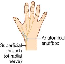Superficial definition anatomy