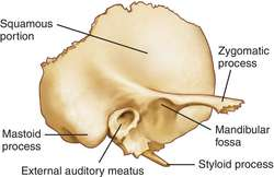 temporal bone | definition of temporal bone by medical dictionary, Human Body
