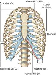 Thorax definition of thorax by medical dictionary