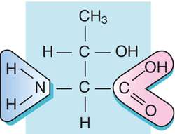 Threonine formula