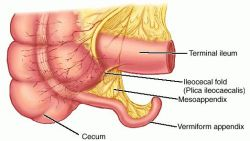appendix epididymis | definition of appendix epididymis by medical, Human Body