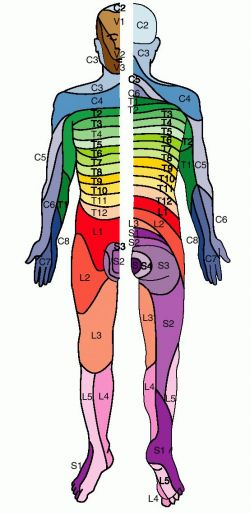 Dermatome Map http://medical-dictionary.thefreedictionary.com/dermatome