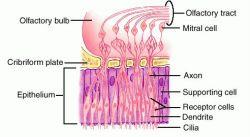 epithelial tissue definition - photo #22