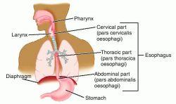 liver cirrhosis vital 101