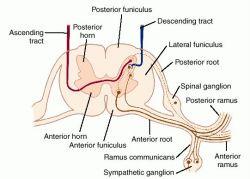 3 hernia nucleus pulposus lumbalis fandeluxe Choice Image