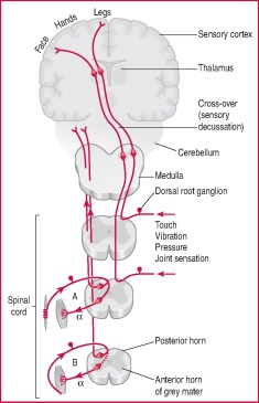 Disorder vagina butt on Nerve or