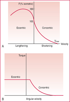 force velocity relationship cardiac muscle definition