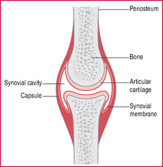 joint capsule | definition of joint capsule by medical dictionary, Human Body