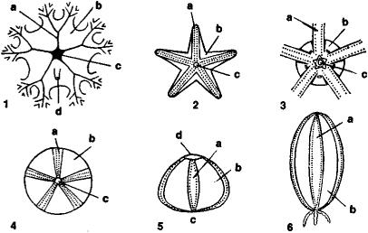 Echinodermata | Article about Echinodermata by The Free Dictionary