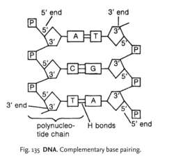 dna strand definition of dna strand by medical dictionary