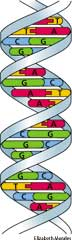 dna definition of dna by the free dictionary