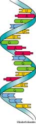 rna definition of rna by the free dictionary