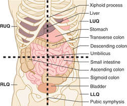 Chapter 1 Introduction To Anatomy And Physiology additionally 7444783 likewise 08 moreover Abdominal Pain Differential Diagnosis furthermore Locations. on luq organs