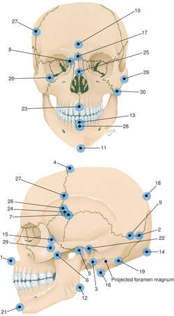 the measurements of man pdf