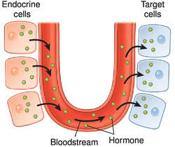 endocrine signalling definition of endocrine signalling