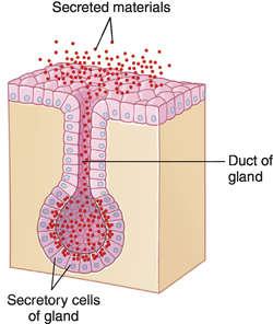 epithelial tissue definition - photo #8