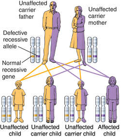 Dominant gene | definition of Dominant gene by Medical dictionary