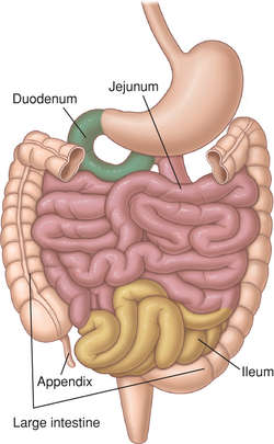 large intestine | definition of large intestine by medical dictionary, Human Body