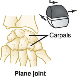 Gliding joint | definition of gliding joint by Medical dictionary