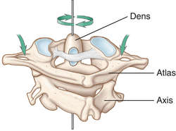 odontoid process | definition of odontoid process by medical, Sphenoid