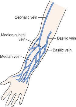 venipuncture | definition of venipuncture by medical dictionary, Cephalic Vein