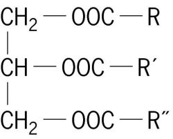 Triacylglycerol | Article about triacylglycerol by The Free Dictionary
