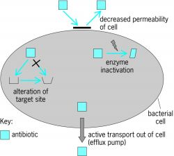 Four common mechanisms of antibiotics resistance
