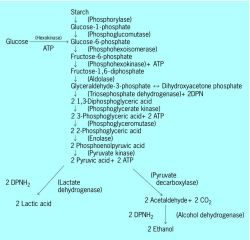 plant respiration definition of plant respiration in the Free ...
