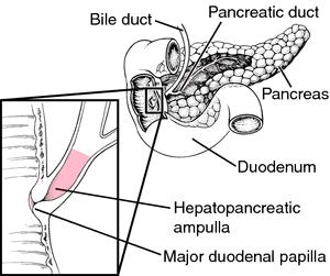 Ampulla of uterine tube | definition of ampulla of uterine ...