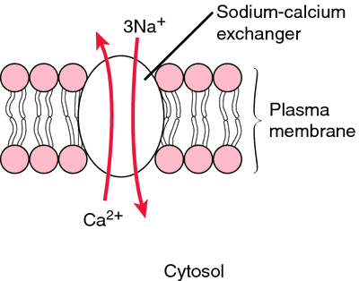 how to bring plasma calcium down