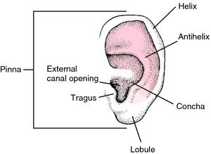 Hurrahvomz vestibule definition ear for Foyer meaning in english