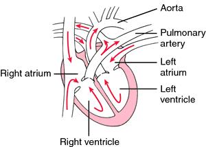 Anatomy biology definition