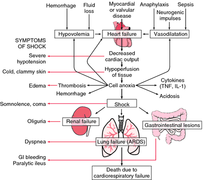 Pathogenesis of shock. (ARDS = adult respiratory distress syndrome, GI ...