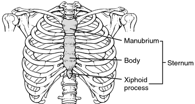 breast bone | definition of breast bone by medical dictionary, Cephalic Vein