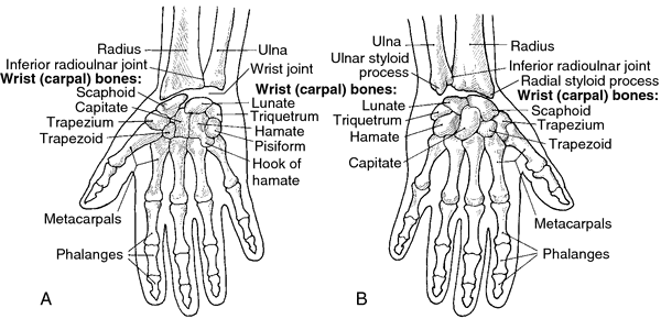 What is the wrist bone called?