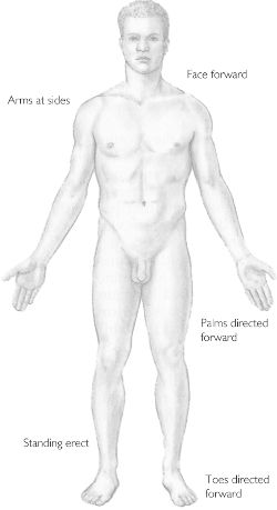 Anatomic position | definition of anatomic position by Medical ...