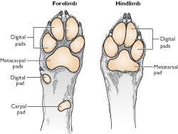 Names Of The Footpads In Dogs And Cats