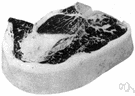 porterhouse - large steak from the thick end of the short loin containing a T-shaped bone and large piece of tenderloin