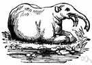 mammal genus - a genus of mammals