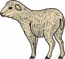 Ruminantia - cattle