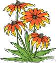 climbing lily - any plant of the genus Gloriosa of tropical Africa and Asia