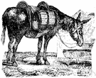 pack animal - an animal (such as a mule or burro or horse) used to carry loads