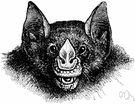 leaf-nosed bat - bat having a leaflike flap at the end of the nose