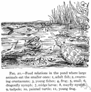 food web - (ecology) a community of organisms where there are several interrelated food chains
