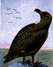 jaeger - rapacious seabird that pursues weaker birds to make them drop their prey